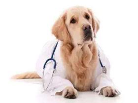 犬瘟热可以吹空调吗?