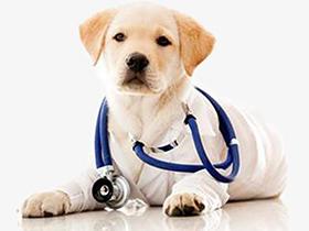 犬瘟热可以吹风吗?