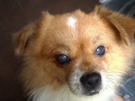 D.一例犬瘟引起眼睛病变及康复过程——16.双眼在康复中